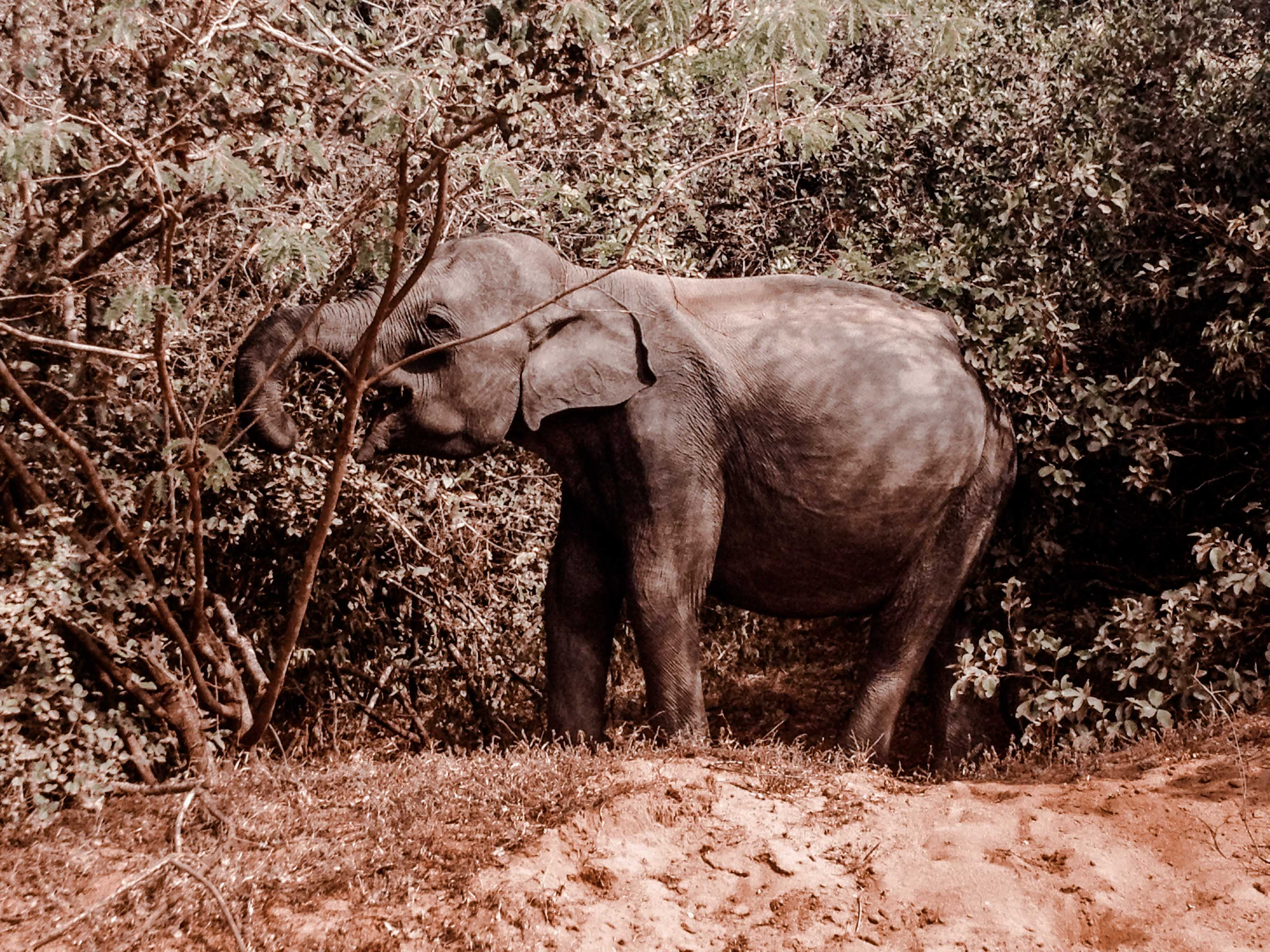 Sri Lanka Safari Tour