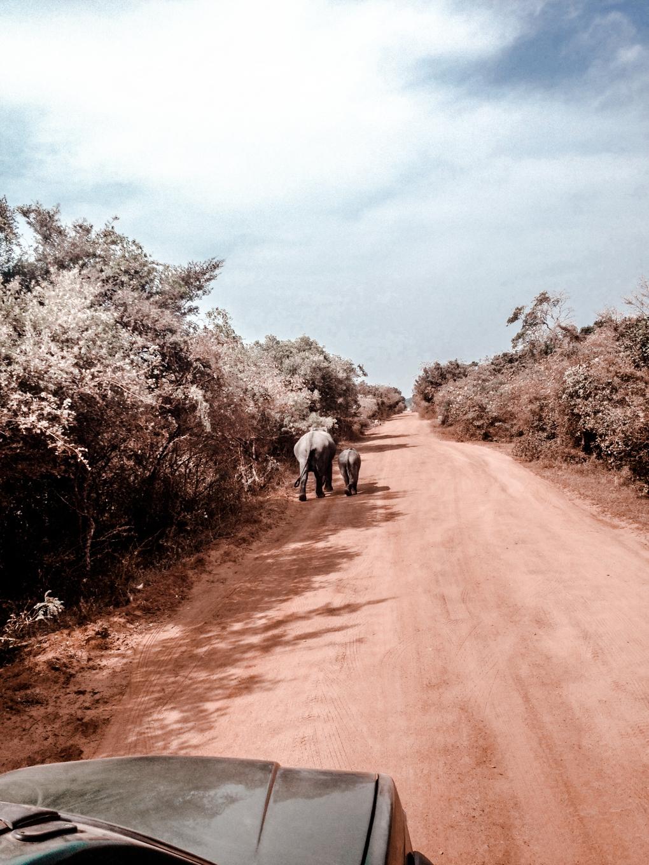 Auf Safari im Yala National Park - 23timezones