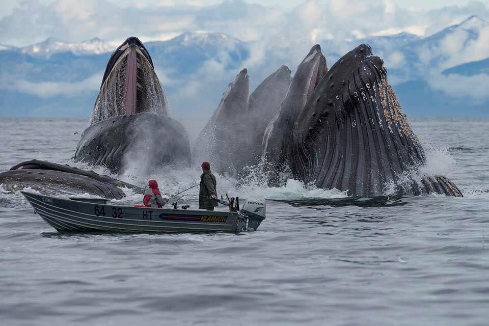 Whales in Alaska - Pic via Pinterest