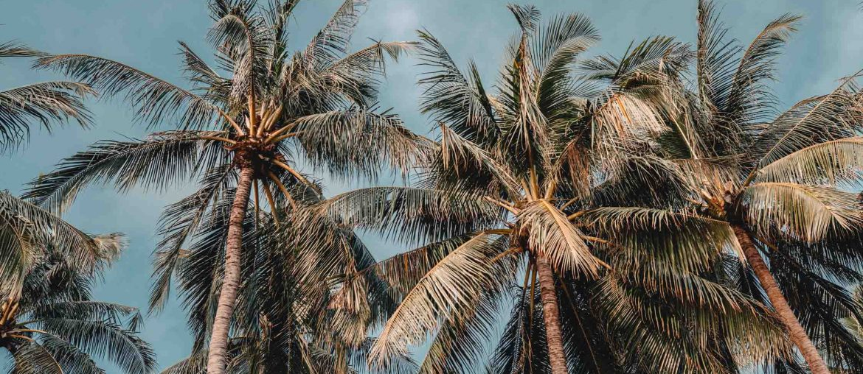 palmen am strand koh tao thailand