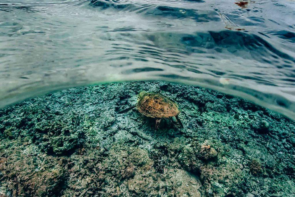 schnrocheln Gili Air Turtles Bali